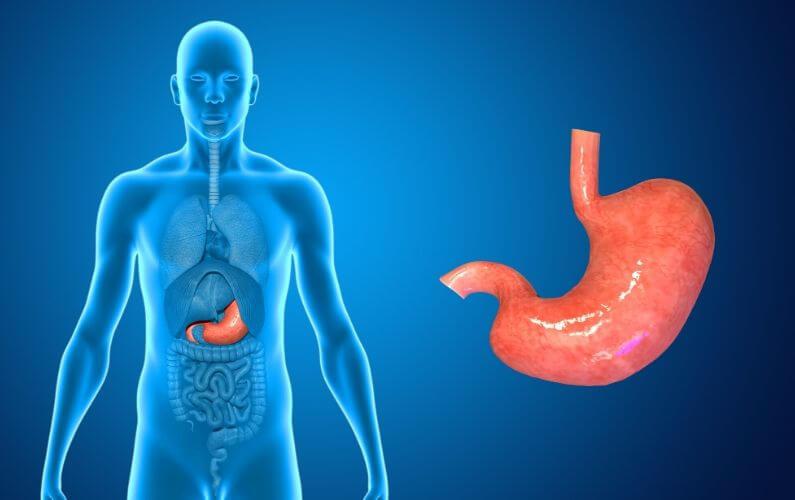 Hongergevoel bij PDS de oorzaken van maaggeluiden